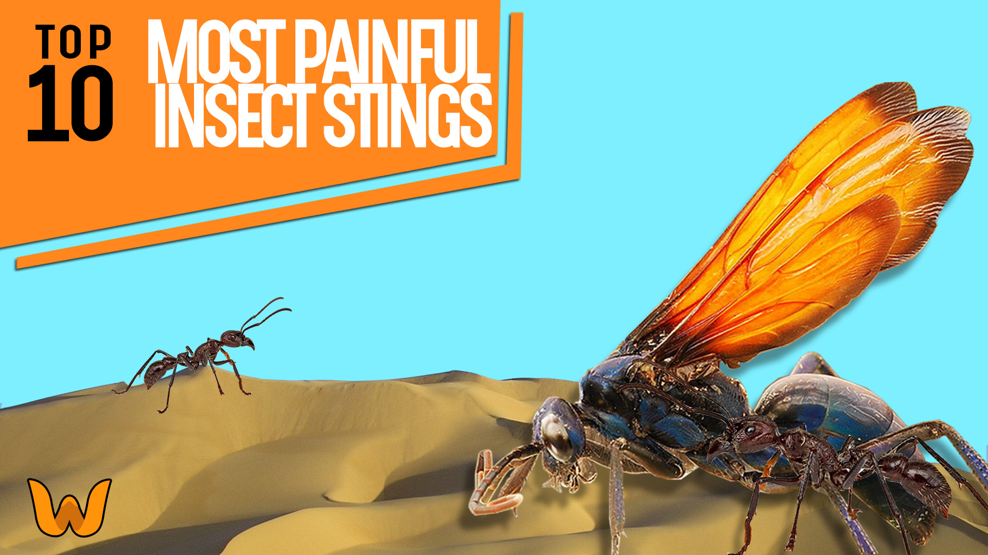 most painful insect stings image